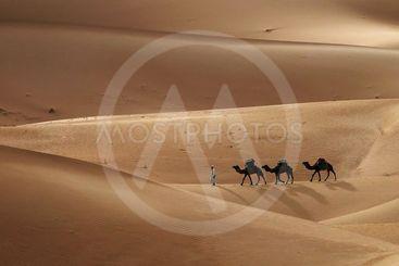 Camel caravan in desert sand dunes