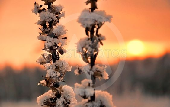 Wintery sunset in the garden