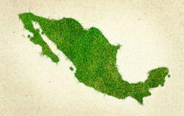 Mexico Grass Map
