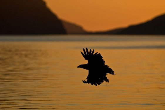 Sea-Eagle-07
