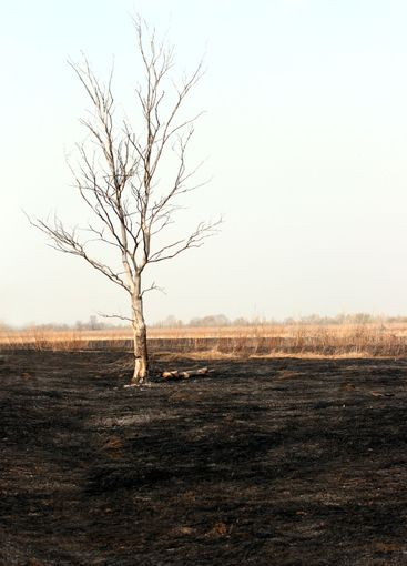 dry tree in burnt steppe
