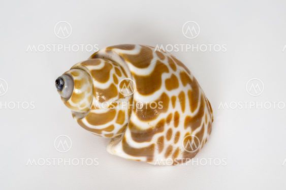 seashell on a light background, macro photo