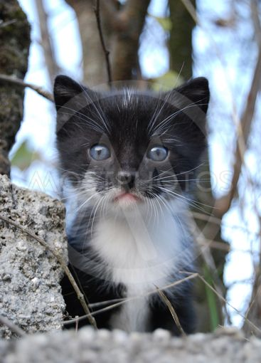 Small black and white cat