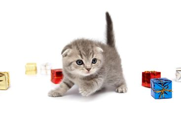 The kitten plays with gift boxes