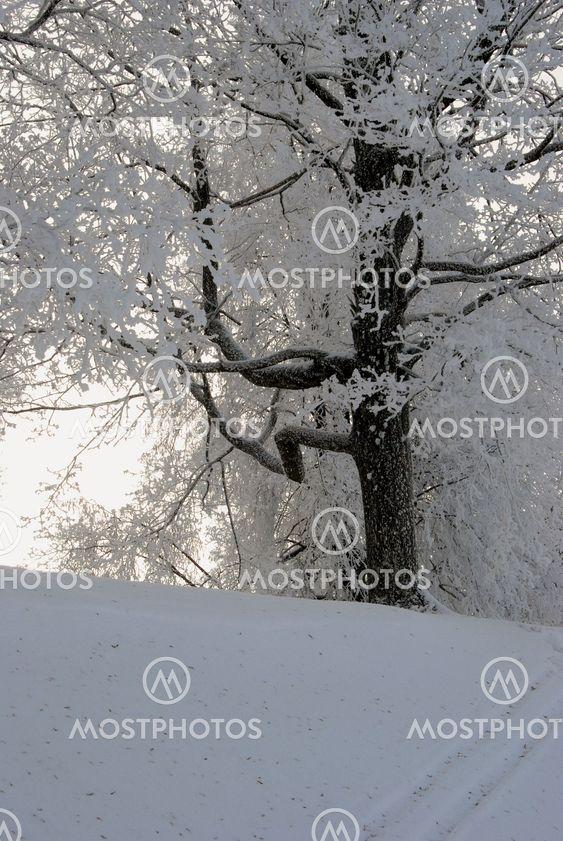Rime på grenar av träd