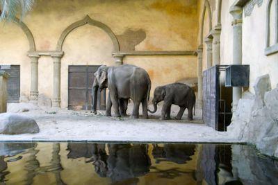 Elephant and the elephant calf