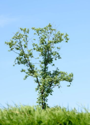 A close up of a tree with a blue sky in the background