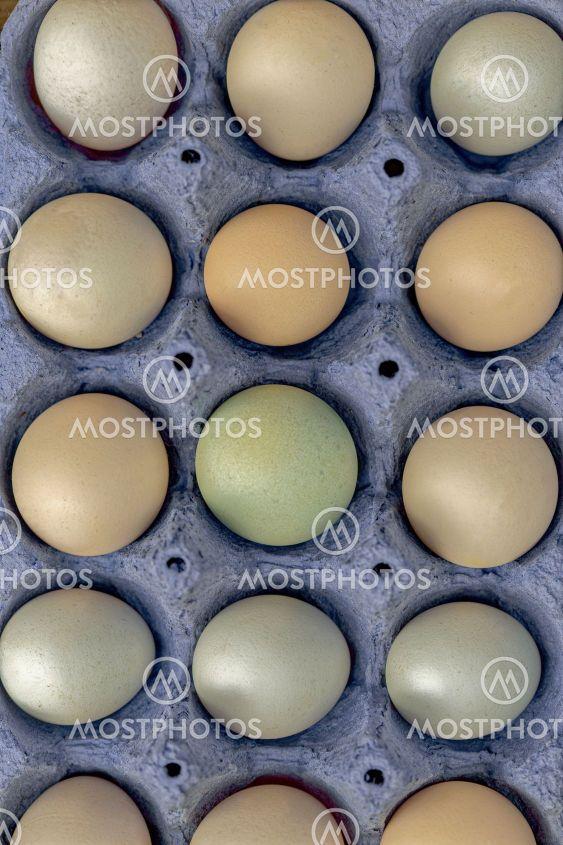 15 små ägg av olika färg från små frigående höns i blå...