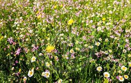 meadow near village Vernasca, Italy