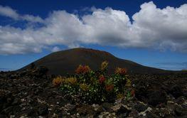 Pflanze vor Vulkan