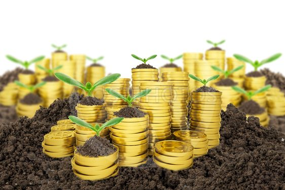 Stack of golden coins with ground and green plant