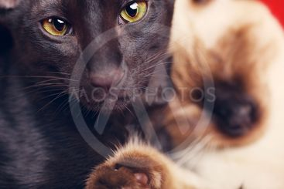 Two Cats Portrait