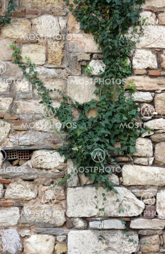Plant over stone wall