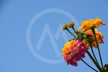 fin blomma