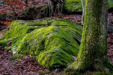 Woodland scene with moss covered rock