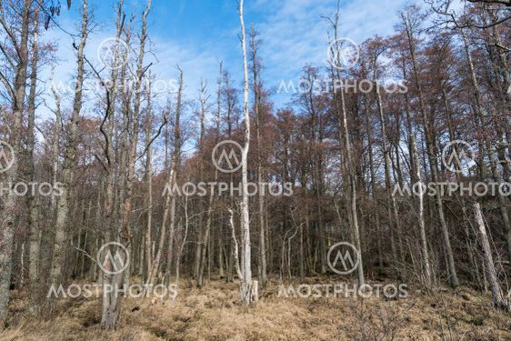 Alsumpskog vid Beijershamn naturreservat på Öland