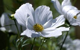 flower and vind,blomma och vind