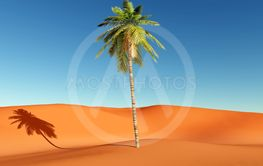 Palm in the desert
