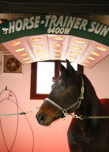 Sun tanning for horse