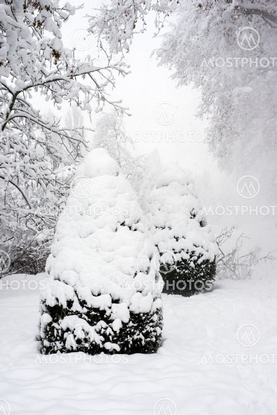 trees covered by the snow in a public garden by snowy day