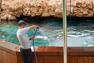 A dolphin getting a fresh water bath at the dolphin...