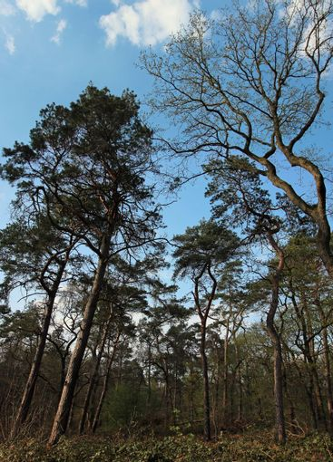 Looking up into the branches in the forest with blue sky
