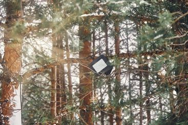 Tree-mounted led spotlight on the pine branch in the...