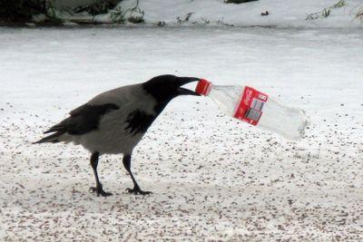 Take a swig of Coke