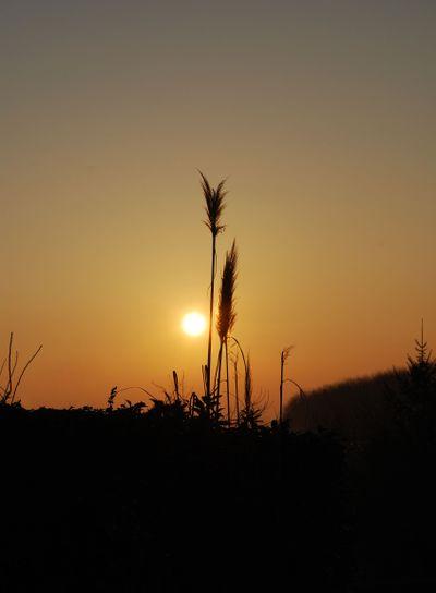 The sunrise 3