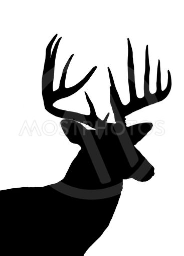 whitetail deer head silhouette isolated on white