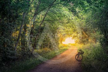 Bike on a forest trail
