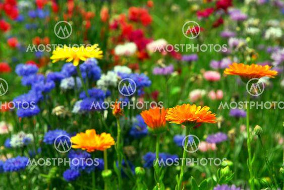 Blomst baggrund