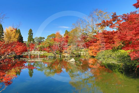 Autumn foliage at the stone bridge in Eikando Temple,...