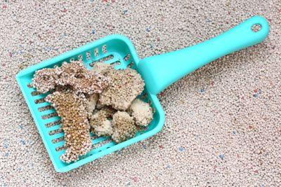 Cat Litter with cat sand scoop