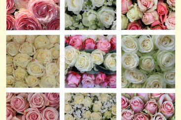 Pink and white roses collage
