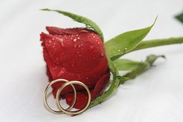 Wedding bands and a red rose
