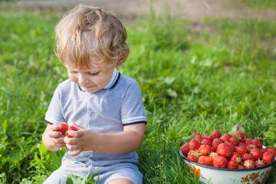 Little boy two years on strawberry farm