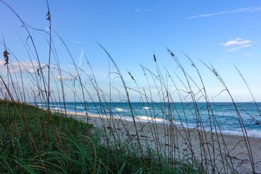 Sea oats  overlooking the beach and ocean on a beautiful...