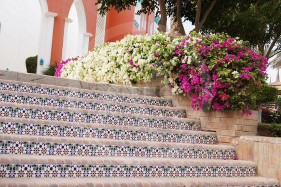 Ceramic tiles stairs and bougainvillea