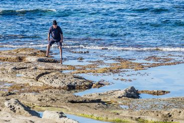 Man collecting sea urchins