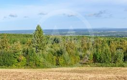 Panorama view at a woodland landscape
