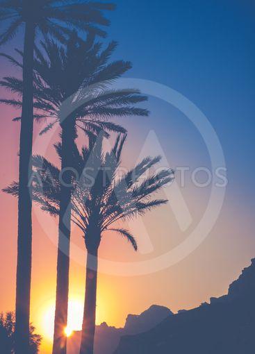 Tropical Hawaii Sunset
