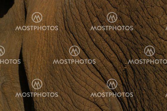 elephant skin detail