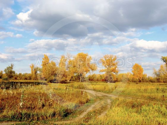 Autumn in the floodplain of the River.