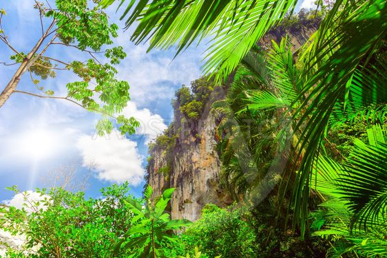 palm leaves and rock