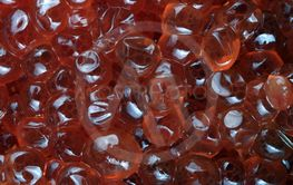 red caviar at day