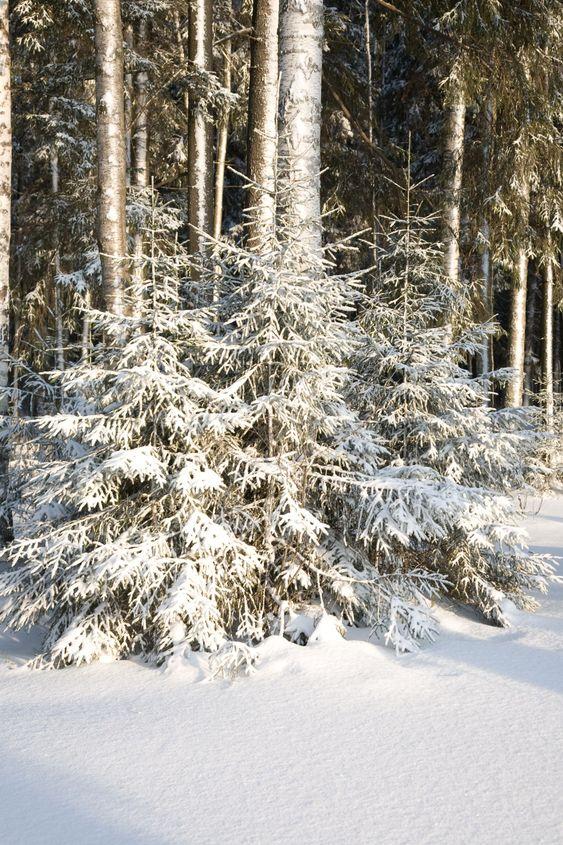 vinter skov