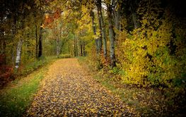 View of a pathway in colorful autumn colors. Trees and...