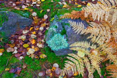 france,yvelines,chevreuse valley : rambouillet forest,...