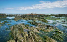 Irish coastline at low tide.
